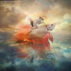 fish rider (evenliu photography) Tags: photomanipulation photoshop fish rider digitalart art imagine surreal surrealism dream dreamscape