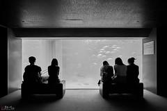 Kaiyukan (Bill Thoo) Tags: 日本 大阪市 18mm batis zeiss ilce7rm2 a7rii sony fish blackandwhite bnw monochrome travel aquarium nippon japan osaka kaiyukan
