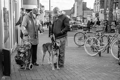 A Man and his Dog (Howie Mudge LRPS BPE1*) Tags: man men women woman people candid casual portrait photography photo photographer bikes pavement dog animal trolley shops windows sky buildings architecture street streetphotography streetlife urbanphotography urban blackandwhite blackwhite bw mono monochrome monochromatic outside outdoors aylesbury england uk everydaylife flickr travel travelling