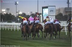 IMG_7156 copy (Services 33159455) Tags: qatar doha horse racing qrec emir horseracing raytohgraphy