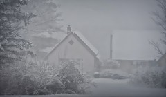 Snow Day!!! (☼Cold & Sunny Today!☼) Tags: weather snowday acrosstheroad neighbors white snowing windy trees heavy