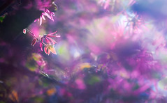 Mother Nature's Eye for Color (Charles Opper) Tags: canon georgia spring bokeh color doubleexposure dreamy eye impression leaves light mood nature