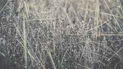 PB_012618_30 (losing.today) Tags: brianyoung oregon pacificnorthwest portland pdx portlandoregon portlandor winter nature outdoors naturepark plantlife plants moodyseason darkseason losingtoday grass grassstudies