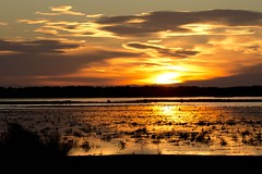Amanecer en la Marisma del Rocío (RubénRamosBlanco) Tags: naturaleza nature paisaje landscape amanecer dawn sunrise marisma marsh color aves birds nubes clouds marismamadre marismadelrocío doñana andalucía españa spain