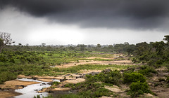 Kruger National Park (Sheldrickfalls) Tags: krugernationalpark kruger krugerpark mpumalanga southafrica
