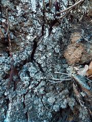 DSCF0449 (AliaGrafica) Tags: wood woods legna alberi trees countryside campagna pattern earth terra macro leaves foglie autunno autumn winter inverno