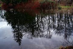 Spiegelung (ingrid eulenfan) Tags: leipzig see spiegelung reflexion park