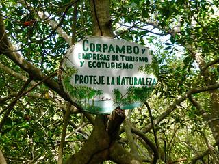 La Boquilla Mangrove