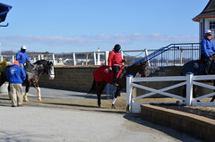 2018-02-02 (1) outrider & pony people go out to the track atLaurel Park (JLeeFleenor) Tags: photos photography md marylandracing maryland laurelparkracecourse laurelpark laurelracecourse l ou outrider trackpeople leadrider horsepeople ponypeople