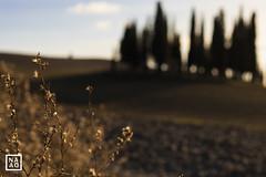 Val d'Orcia | NaDa Fotografie (_annalaura_) Tags: toscana tuscany valdorcia cipressi sanquiricodorcia
