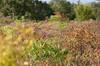 Autumn Alvar (peterkelly) Tags: digital canon 6d ontario canada northamerica peleeisland stoneroadalvar ontarionaturereserve naturereserve ontarionature alvar shrub bush sumac