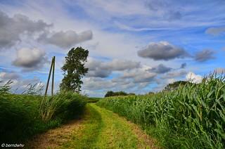 Auf dem Lande bei Garsiens / Landkreis Friesland