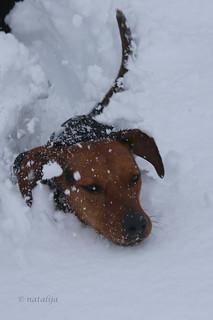 Lila v snegu