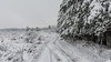 Winter road (Milen Mladenov) Tags: 2018 bulgaria montana forest park path pinetrees road season seasonal snow snowywinter trees walk winter winterday winterforest