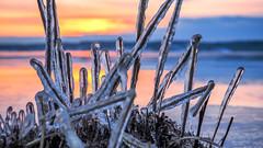 Eyes on the Ice (Jens Haggren) Tags: ice grass sea seaside morning sunrise colours landscape closeup winter nacka sweden olympus em1 jenshaggren