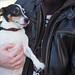 Fernando (Explored) (I Flickr 4 JOY) Tags: dog russelterrior squamish adopteddog rescuedog fernando