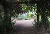 Vineyard (elianek) Tags: vineyards vinicola farm nature natureza oregon portland usa eua estadosunidos unitedstates
