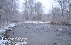 Winter Pond (taylorport16) Tags: landscape snowylandscape snow pond water trees outdoors nature snowing outdoorphotography landscapephotography