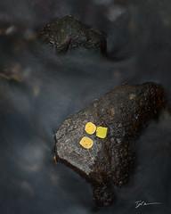 Maroon Creek (TylerKnowltonPhotography) Tags: leaf yellow stream river water maroon creek bells aspen snowmass minimalist minimalistic
