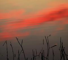 The muddy path to clouds (Robyn Hooz) Tags: nuvole clouds cielo sky canne acqua canali scorrere water padova voltabarozzo dream haiku