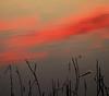 The muddy path to clouds (Robyn Hooz (away)) Tags: nuvole clouds cielo sky canne acqua canali scorrere water padova voltabarozzo dream haiku