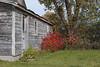 2017-10-22_10-41-50 Red Sumac (canavart) Tags: abandoned church autumn princeedwardcounty ontario canada sumac wmchurch 1871