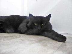 Bruce - 3 year old neutered male