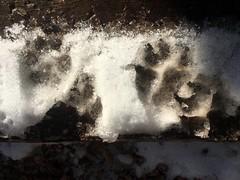 Dog Was Here (cogdogblog) Tags: dog felix
