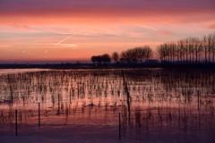 Voor zonsopkomst / Early in the morning / Het Waterrijk / Park Lingezegen (corrie.nijenmanting) Tags: zonsopkomst vroeg smorgen ochtend morning parklingezegen waterrijk arnhem rijkerswoerd elst