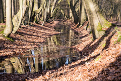 Creek (ahaepers) Tags: trees reflection winter leaves leading line light