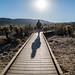 Walk Through Cholla Cactus Garden - Joshua Tree National Park, California