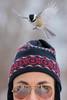 Cleared to land ! (LASCAR35) Tags: blackcappedchickadee mésangeàtêtenoire bird birding 80d canon 100400isii etang burbank danville