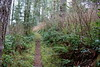 This was the basic view for much of the hike (rozoneill) Tags: cape mountain berry creek siuslaw national forest hiking oregon florence princess tasha scurvy ridge trail nelson coastal