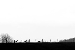 Petit jour (www.jkm-photographie.com) Tags: photographestrasbourg olympus pro landscape blanc mefoto em5 micro43 zuiko em1 mkii manfrotto paysage jkmphotographie julienkam omd unautreregard chevreuils noir nature lowepro