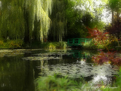 Dreaming of Monet. (Martha MGR) Tags: giverny claudemonet ninpheas garden jardin lake agua water trees árvore dream beautifulplace france tourist tourism tour trip marthamgr