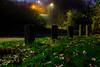the path (wibra53) Tags: 2014 light nacht nachtopname nature natuur night nightshot stilllifephotography stilleven verlichting