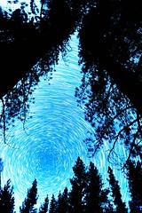 Star Trails - Markleeville California (JarrodLopiccolo) Tags: stars startrails trees california markleeville northstar astrophotography sierra sierranevada winter 2018 16mm canon mark ii