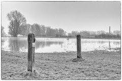 it's in the post (stevefge) Tags: 2017 beuningen hoogwater waal flood winter uiterwaarden posts grass water trees bomen landscape blackandwhite bw monochrome mono zw zwartwit highkey fields nederland netherlands nl nature natuur gelderland reflectyourworld reflections