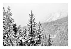 Mountains in a Winter Storm (rich trinter photos) Tags: mountrainier winter ashford washington unitedstates us rickseckerpointroad landscape trinterphotos storm blackandwhite monochrome