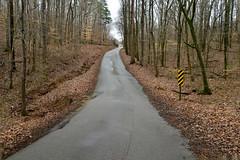 Middle of the Road (BKHagar *Kim*) Tags: bkhagar road woods trees leaves outdoor winter limestonecounty athens al julesphotochallengegroup challenge