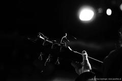 Karsten Hochapfel: guitar, cello (jazzfoto.at) Tags: wwwjazzfotoat wwwjazzitat jazzitsalzburg jazzitmusikclubsalzburg jazzitmusikclub jazzfoto jazzphoto markuslackinger jazzinsalzburg jazzclubsalzburg jazzkellersalzburg jazzclub jazzkeller jazzit2018 jazz jazzsalzburg jazzlive livejazz konzertfoto concertphoto liveinconcert stagephoto greatjazzvenue downbeatgreatjazzvenue salzburg salisburgo salzbourg salzburgo austria autriche blitzlos ohneblitz noflash withoutflash sony sonyalpha sonyalpha77ii alpha77ii sonya77m2 concert konzert concerto concierto a77m2