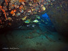 bvi 17 P8312375 (Pauline Walsh Jacobson) Tags: scuba dive diving bvi water coral reef ocean sea marine life underwater fish wide angle schooling