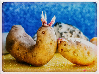 Potato Love | I Am The Walrus