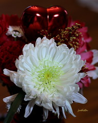 hearts and flowers (Judecat (back on the farm)) Tags: chrysanthemum mum bouqet valentinesday valentine love