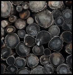 Odun Yığını, Urla (cim21) Tags: wooden wood woodpile fire fireplace odun yığın soba şömine sıcak lumberjack oduncu timber cut kesik urla turkey türkiye izmir dark koyu heat ısı kış winter texture doku