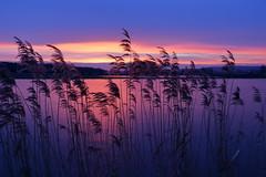 IMG_6809 (geraldtourniaire) Tags: 24105l canon sonnenaufgang franken eos6d natur nature landschaft licht