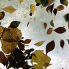 構成=Composition-141/Stillness of dance of falling leaves (kouichi_zen) Tags: leaves fall shadow nature brown white move
