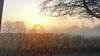 20161228_153943 [ps] - The Burning Bush (Anyhoo) Tags: anyhoo photobyanyhoo a50 cheshire m6borked lowsun winter mist fog fields mistrising cold freezing countryside flat plain sunset england uk