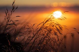Mt. Sanitas Sunrise