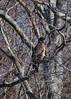 Watcher (EHPett) Tags: connecticutriver connecticutbirds riverquest bird wildlife animal connecticut
